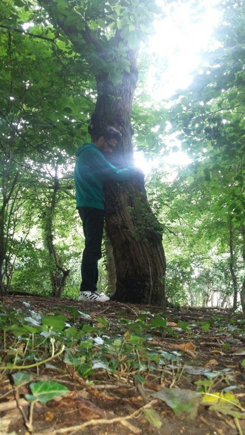 tree hug 2
