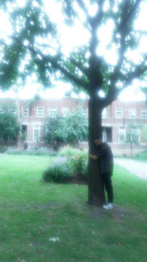 tree hug 3